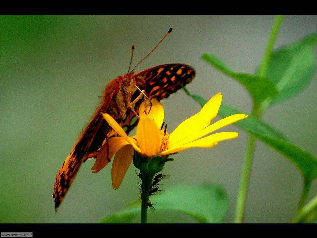 Foto di Farfalle 2-060