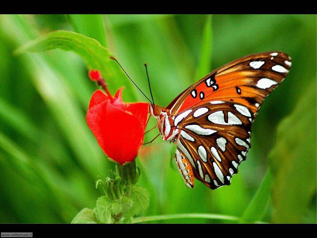 Foto di Farfalle 2-061