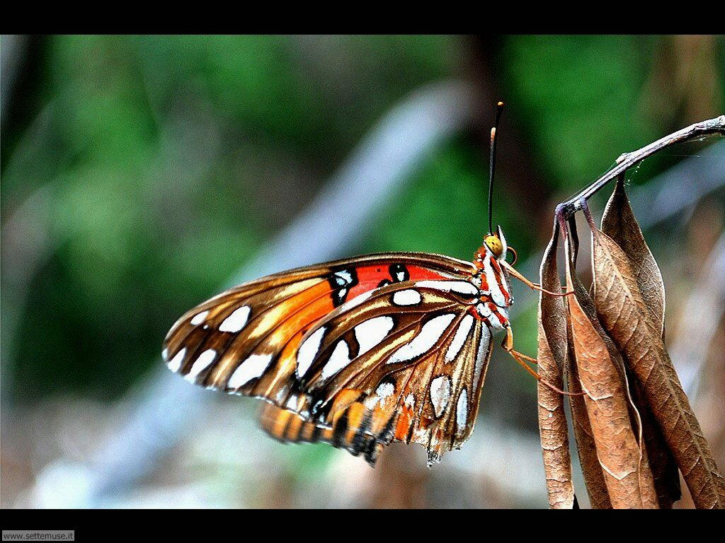 Foto di Farfalle 2-064
