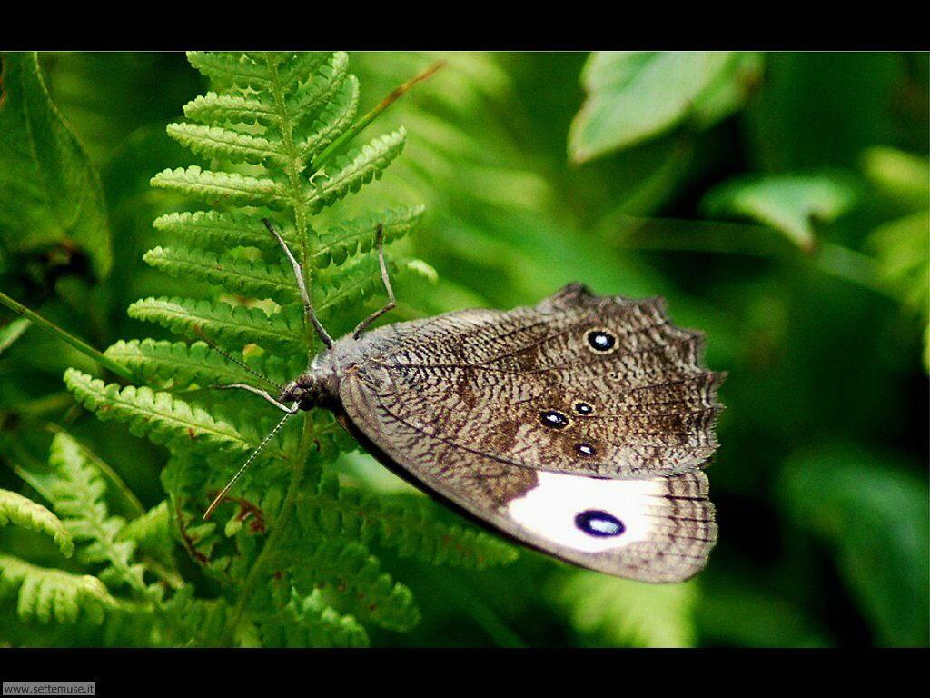 Foto di Farfalle 2-068