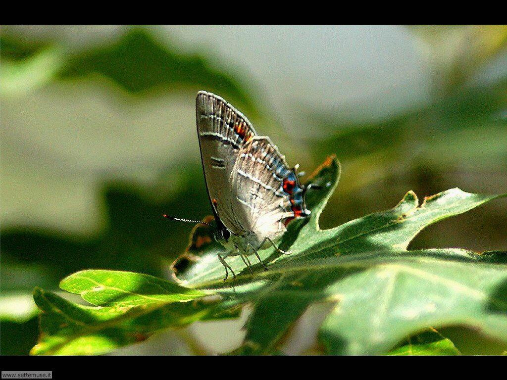 Foto di Farfalle 2-069