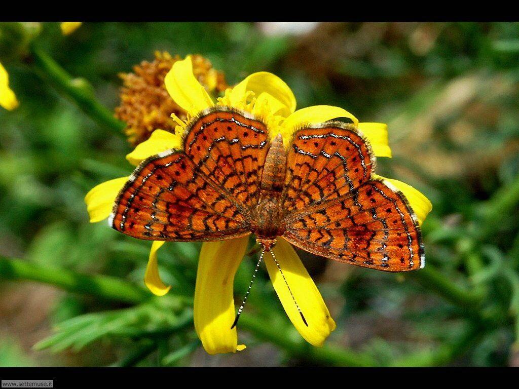 Foto di Farfalle 2-071