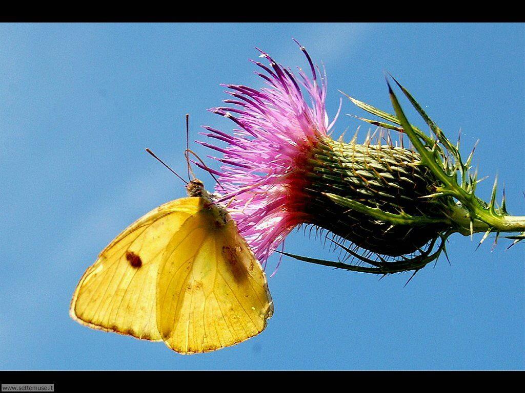 Foto di Farfalle 2-074