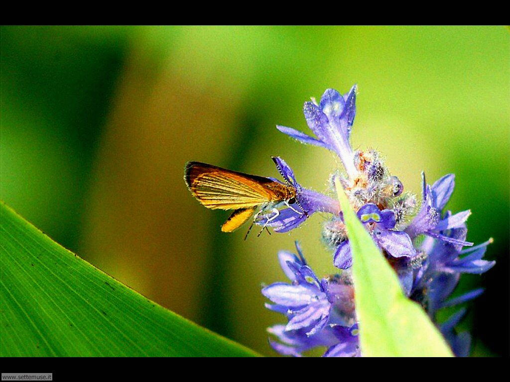 Foto di Farfalle 2-079