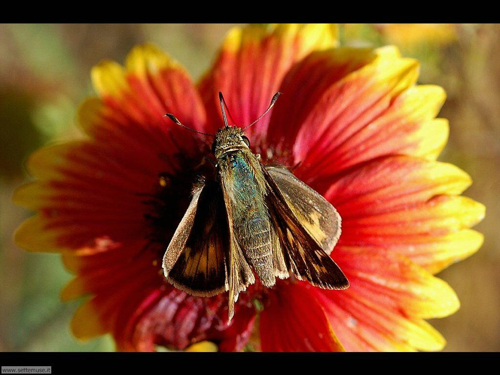 Foto di Farfalle 2-082