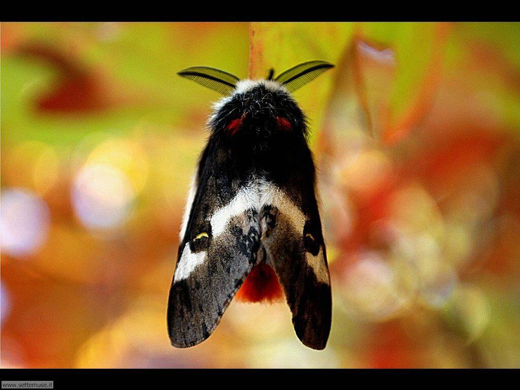Foto di Farfalle 2-083