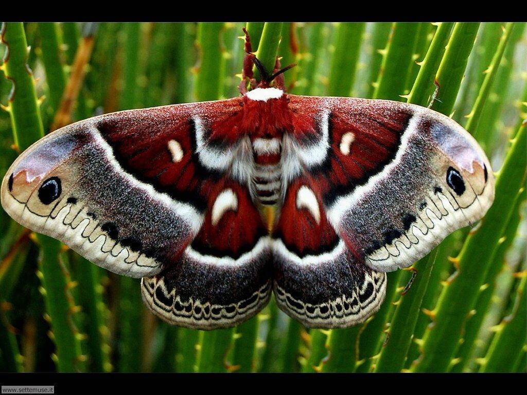 Foto di Farfalle 2-084