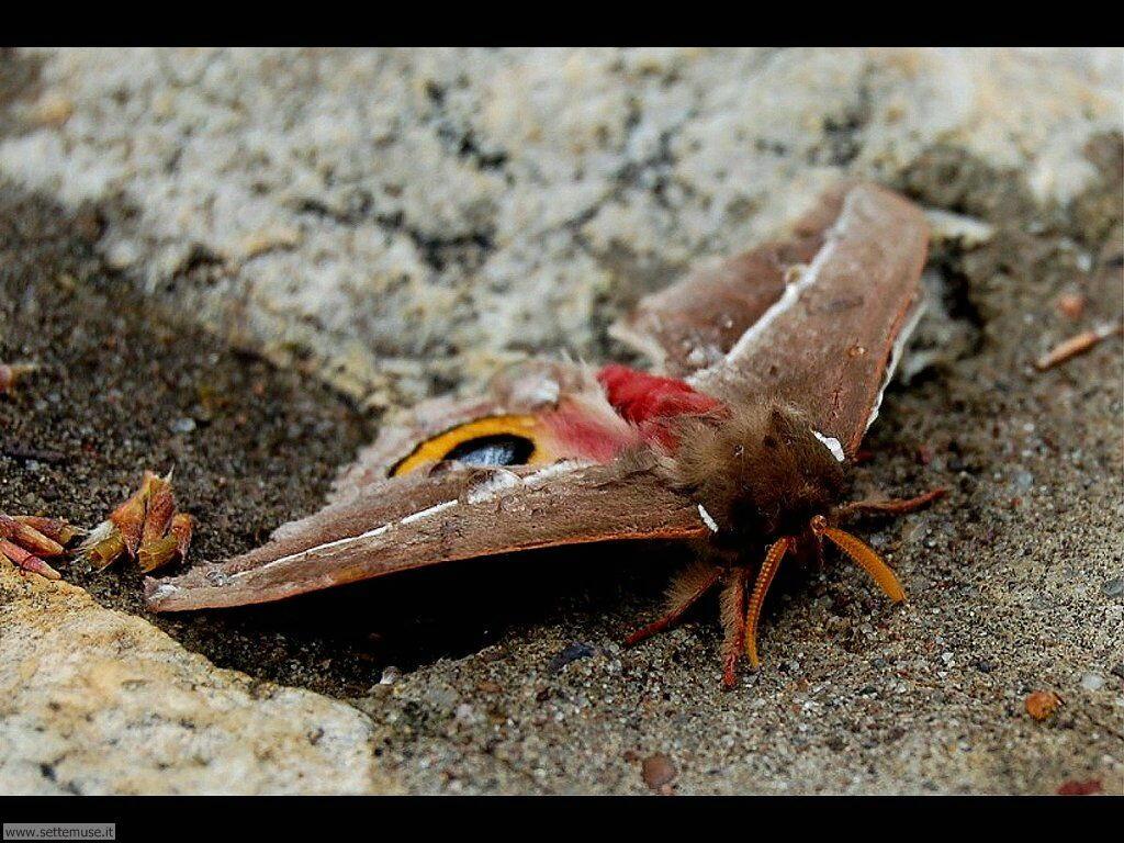 Foto di Farfalle 2-085