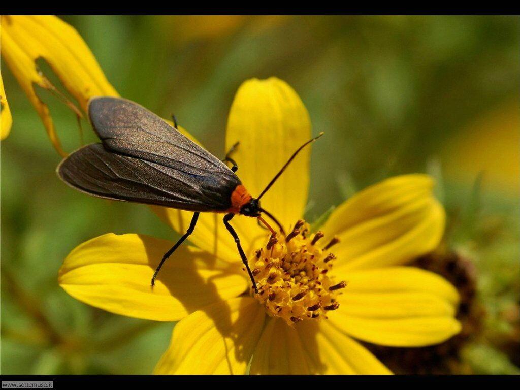 Foto di Farfalle 2-086