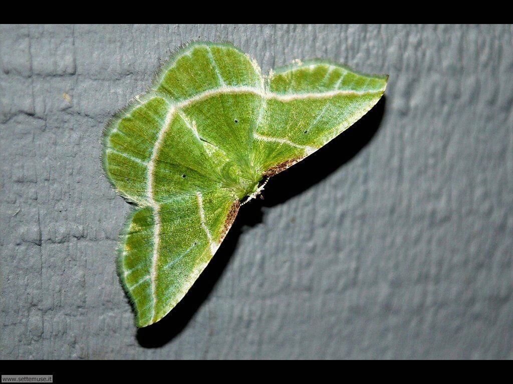 Foto di Farfalle 2-092