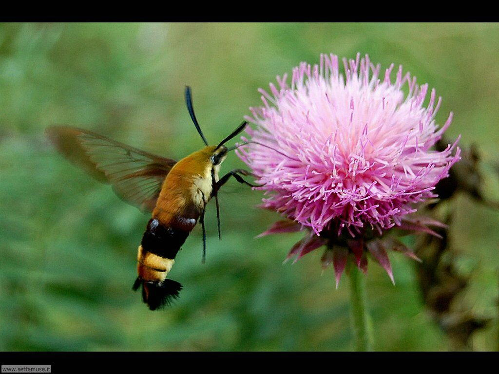 Foto di Farfalle 2-095