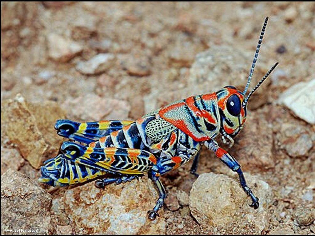 Foto di insetti strani 501