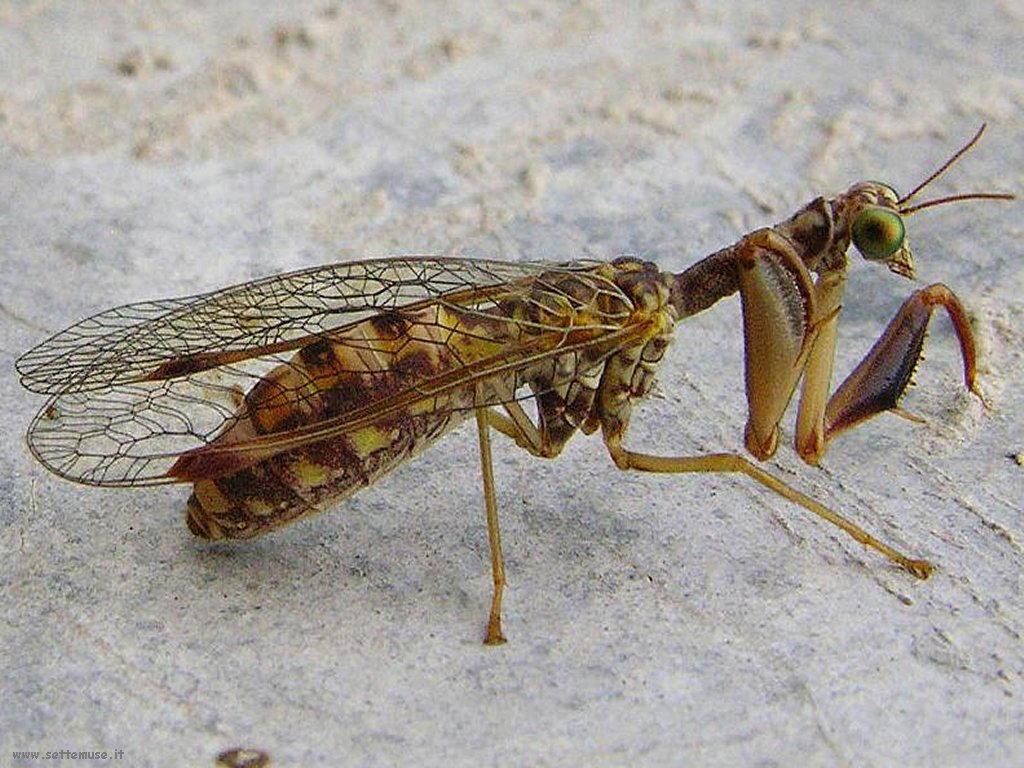 Foto di insetti strani 504