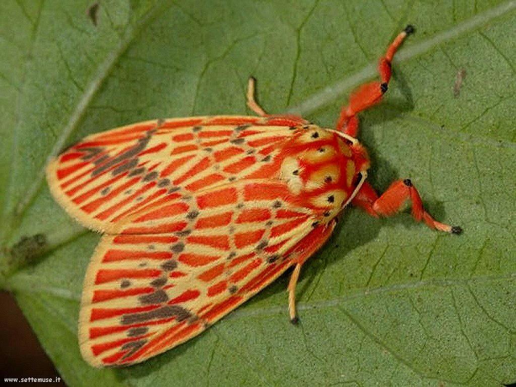 Foto di insetti strani 508
