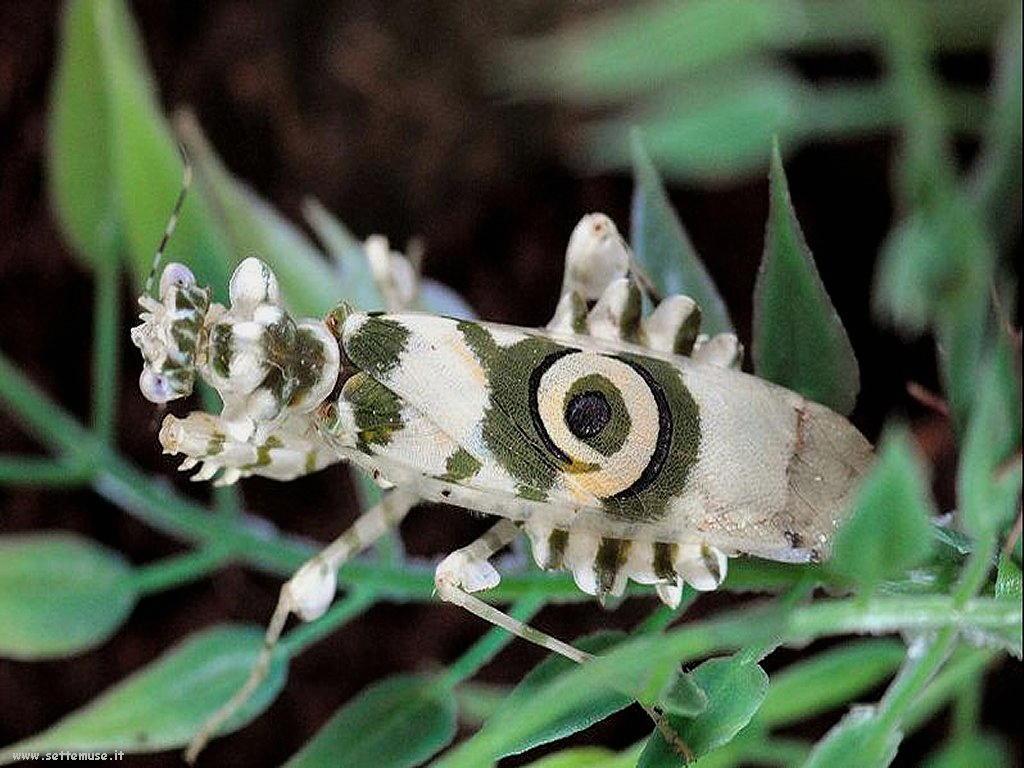 Foto di insetti strani 513