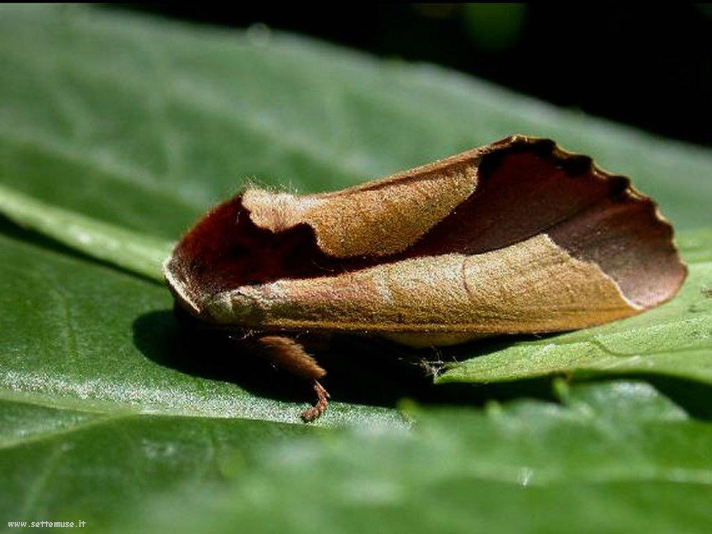 Foto di insetti strani 514