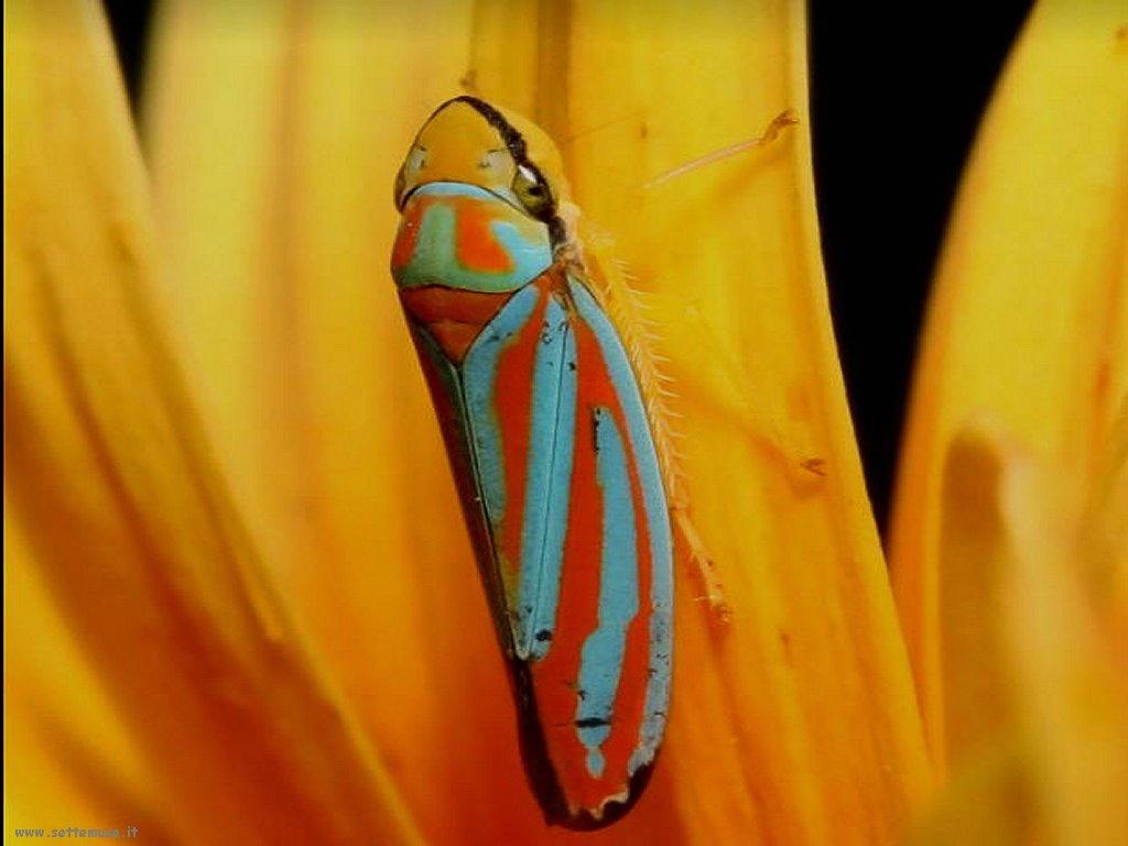 Foto di insetti strani 515