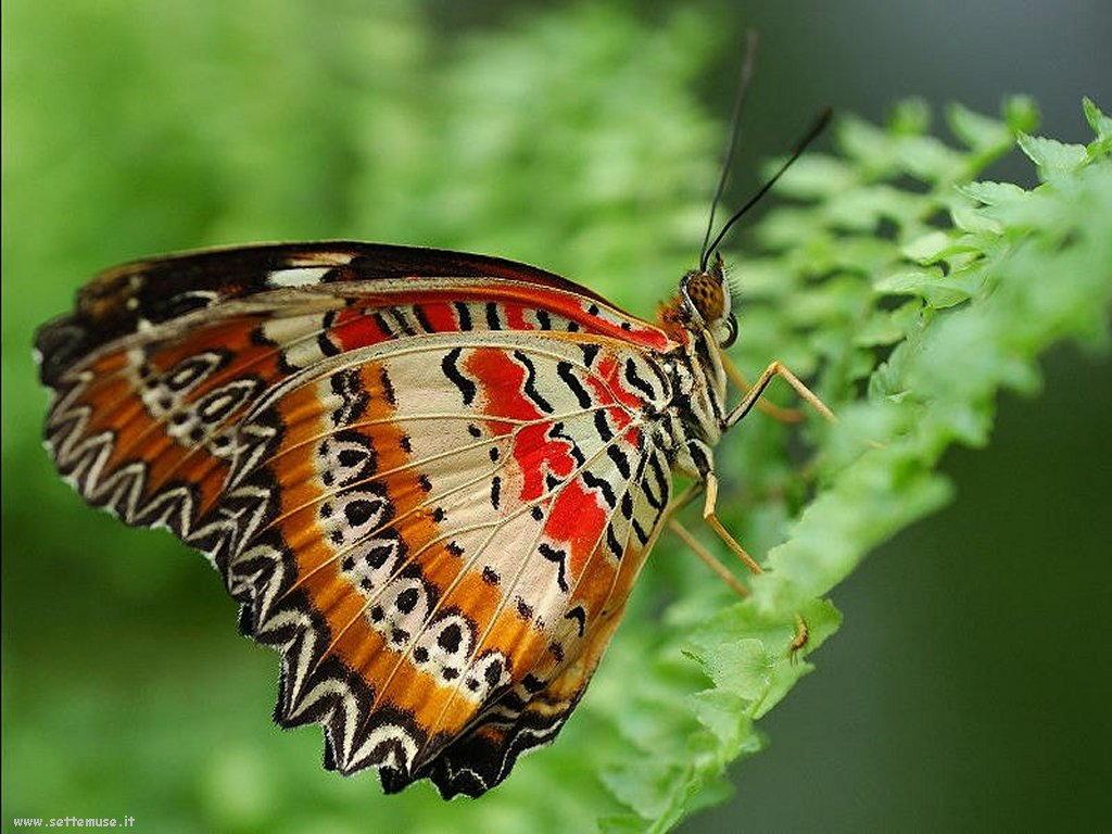 Foto di insetti strani 516