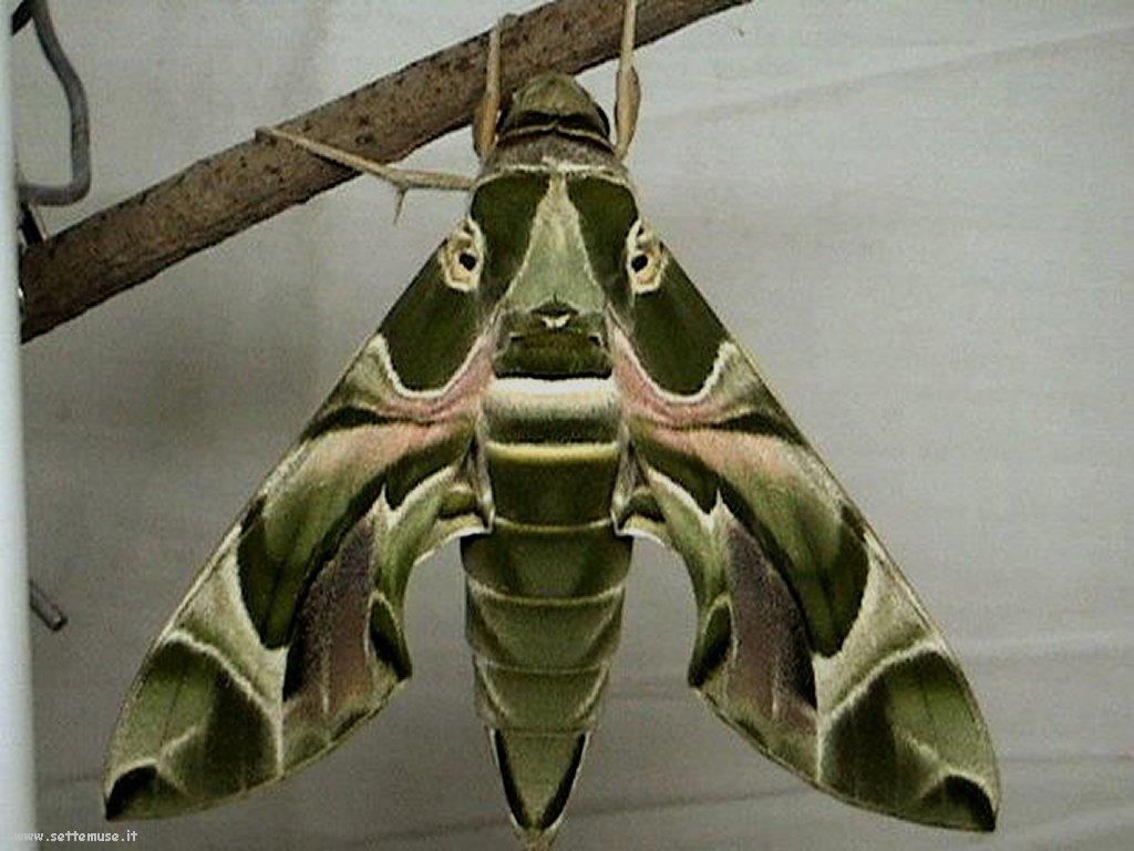 Foto di insetti strani 518