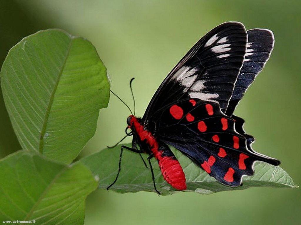 Foto di insetti strani 519