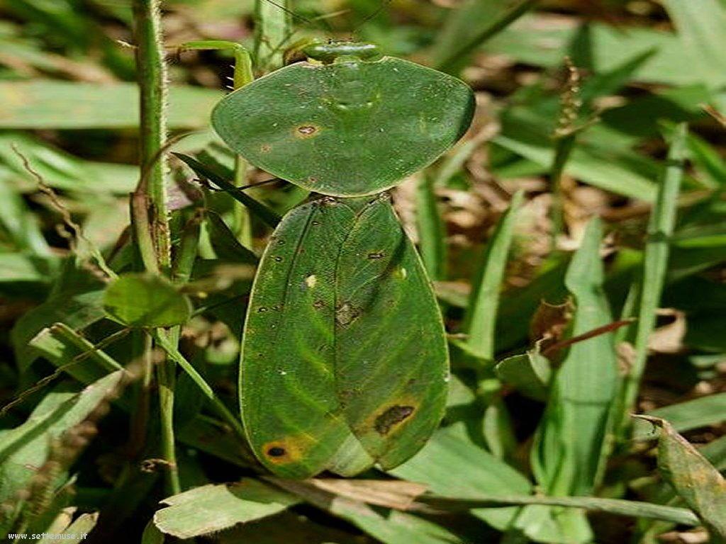 Foto di insetti strani 520
