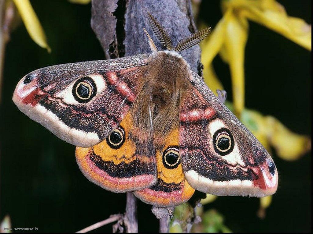 Foto di insetti strani 521