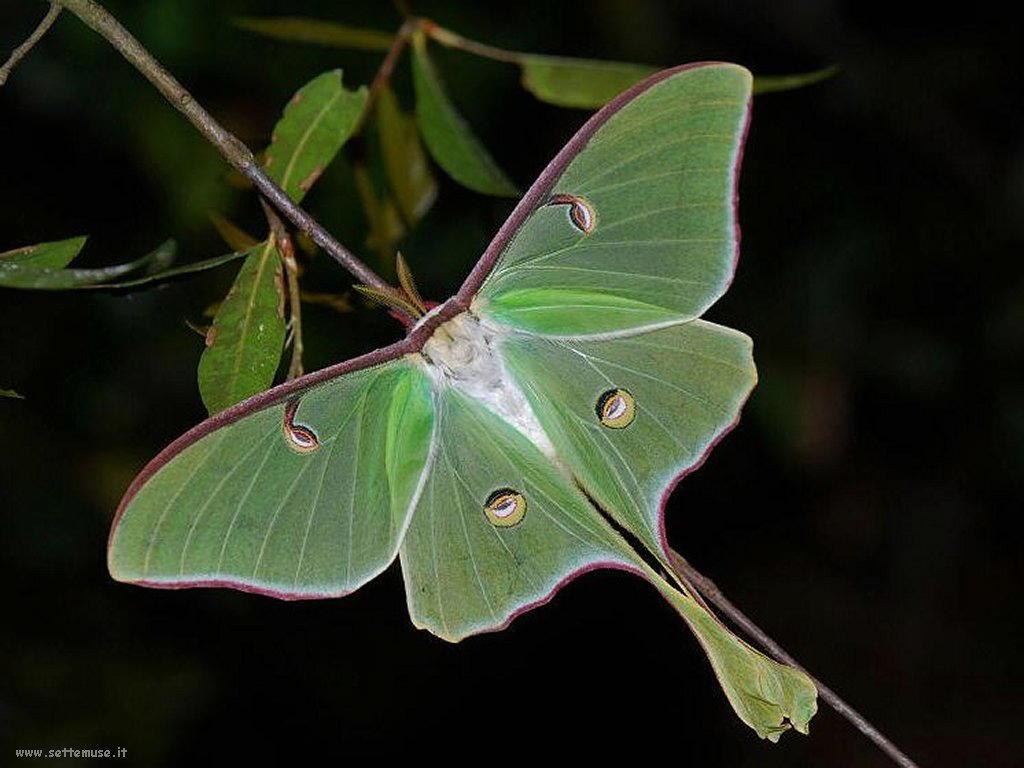 Foto di insetti strani 522