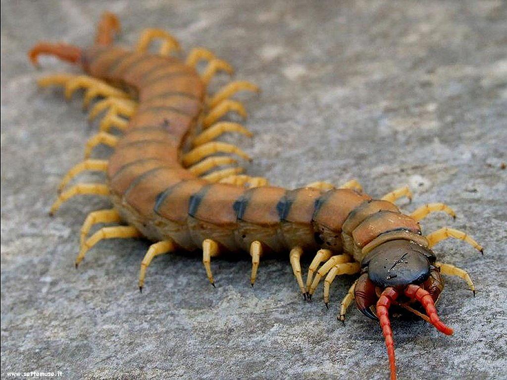 Foto di insetti strani 523