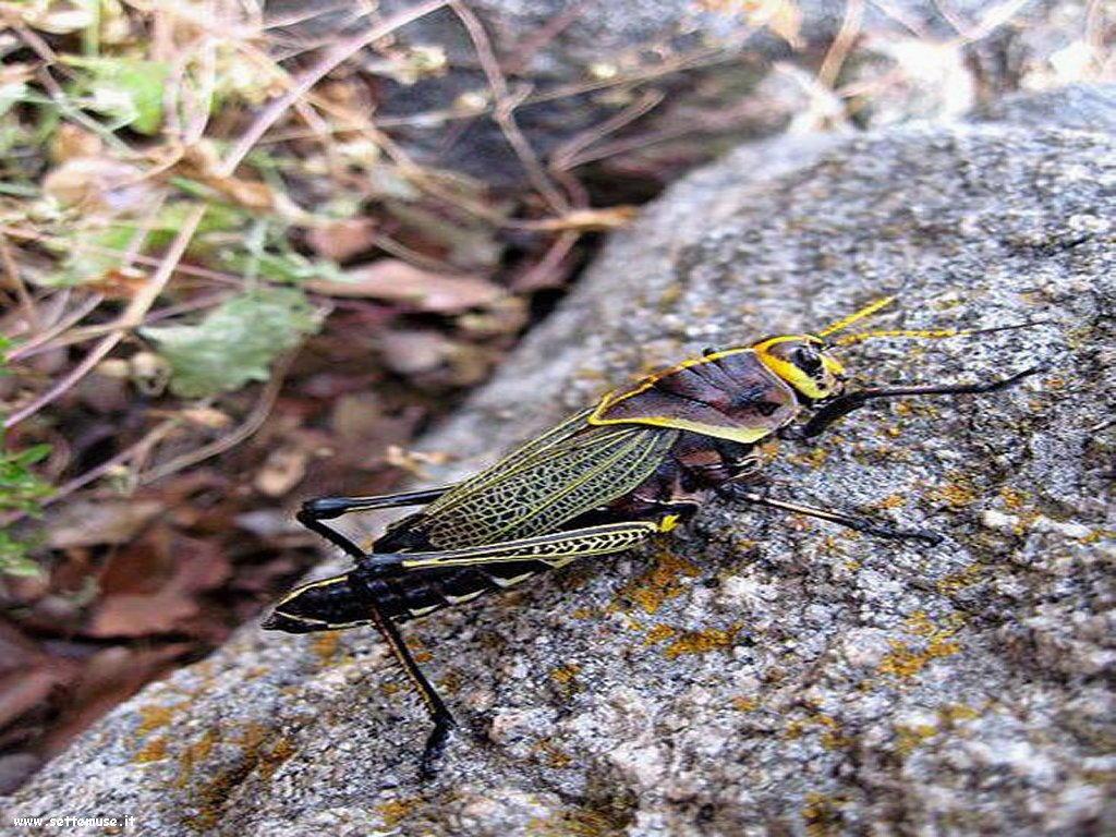 Foto di insetti strani 524