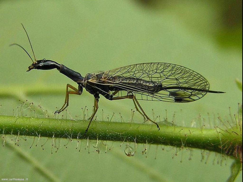 Foto di insetti strani 526