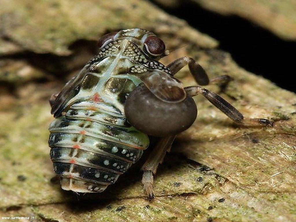 Foto di insetti strani 527