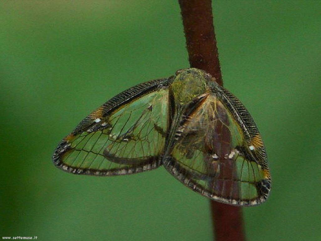Foto di insetti strani 528