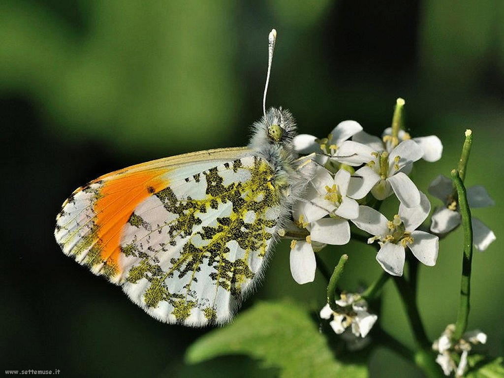 Foto di insetti strani 531