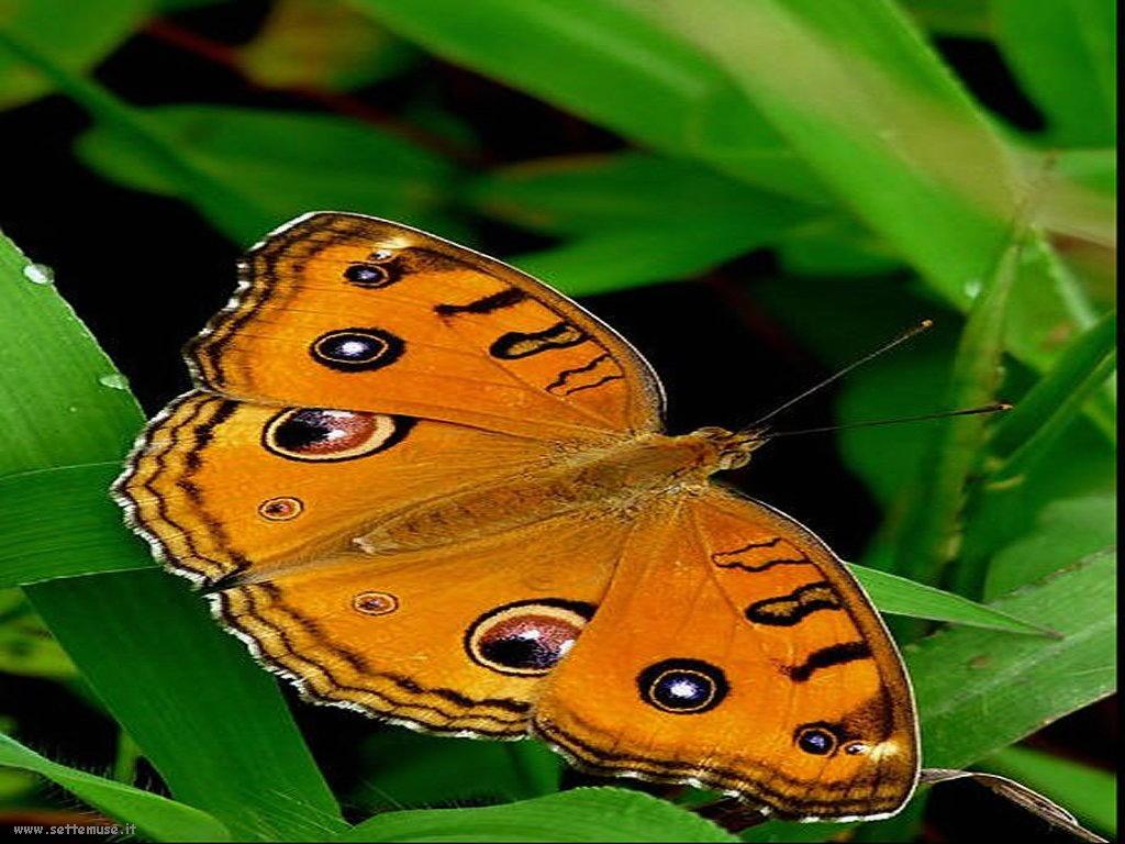 Foto di insetti strani 532