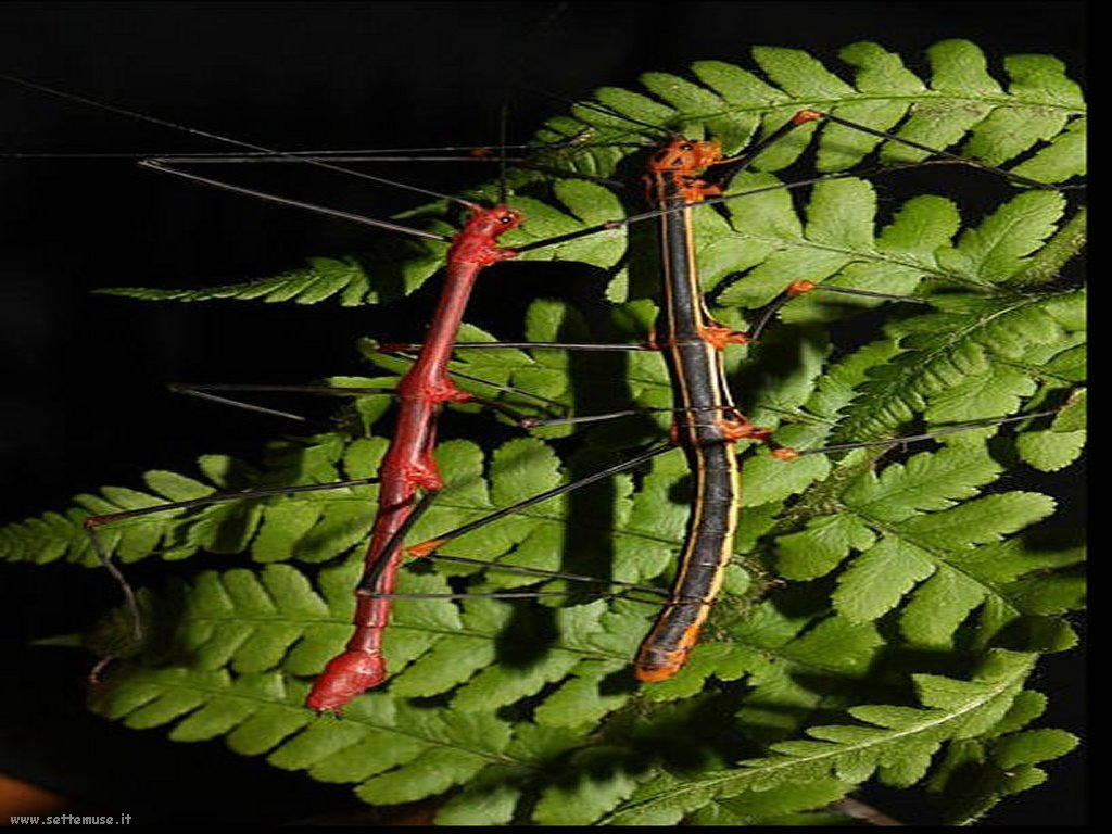 Foto di insetti strani 533