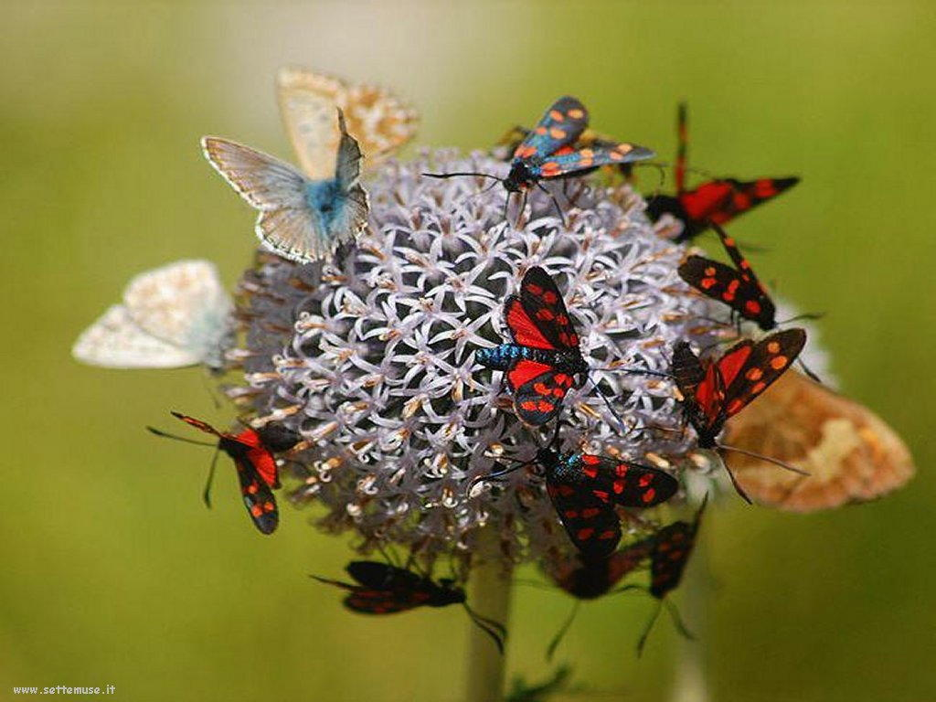 Foto di insetti strani 537