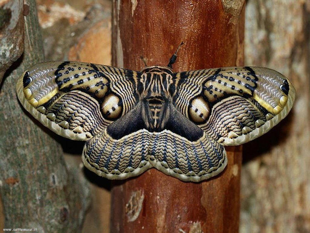 Foto di insetti strani 539