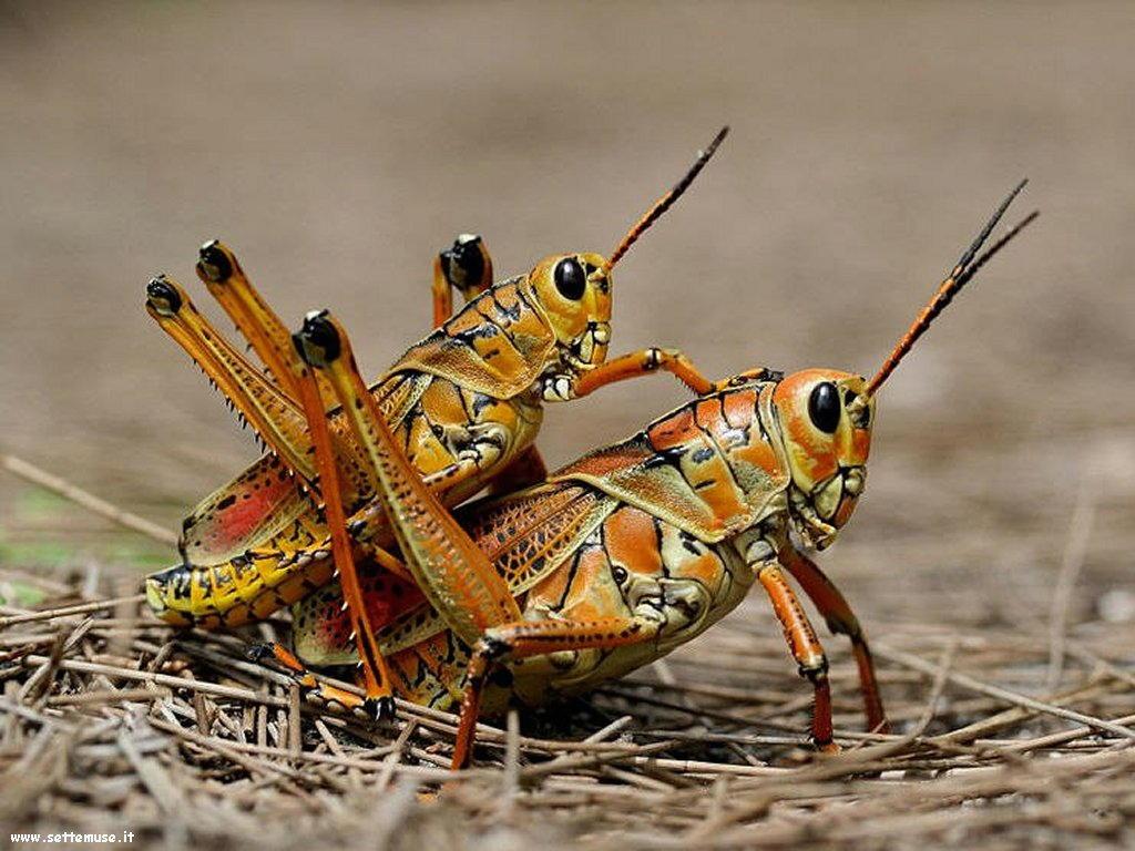 Foto di insetti strani 540