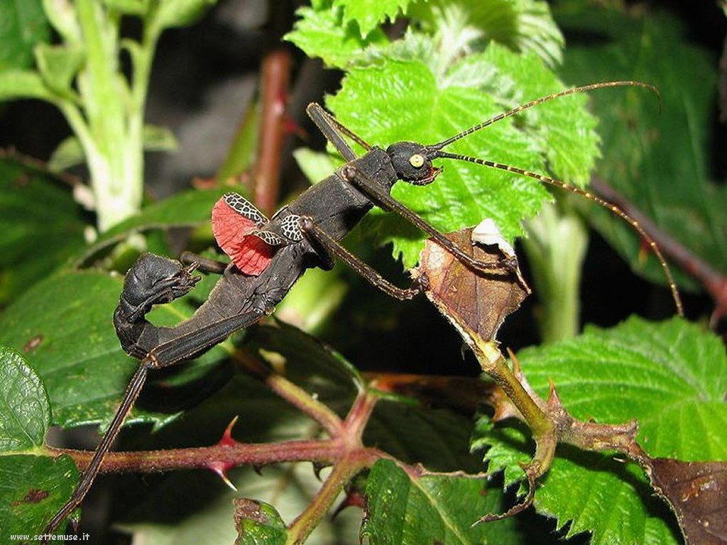 Foto di insetti strani 541