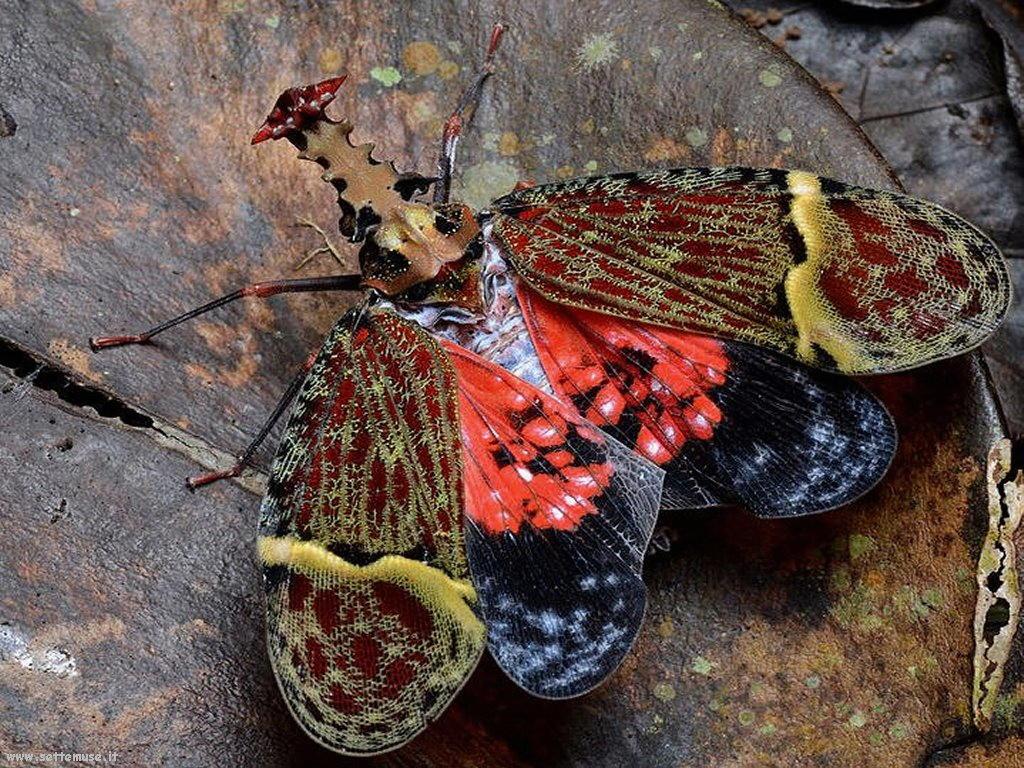 Foto di insetti strani 542