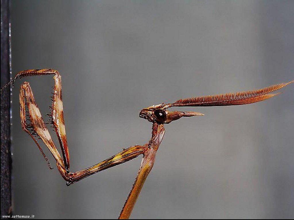Foto di insetti strani 543