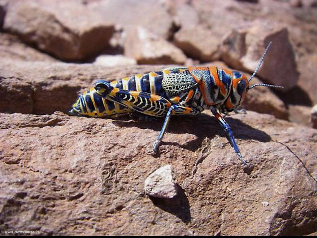Foto di insetti strani 544