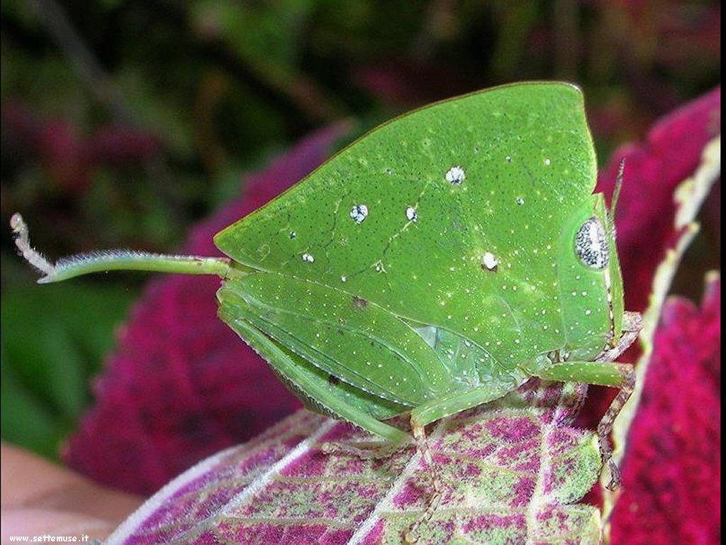foto di vari insetti strani per sfondi
