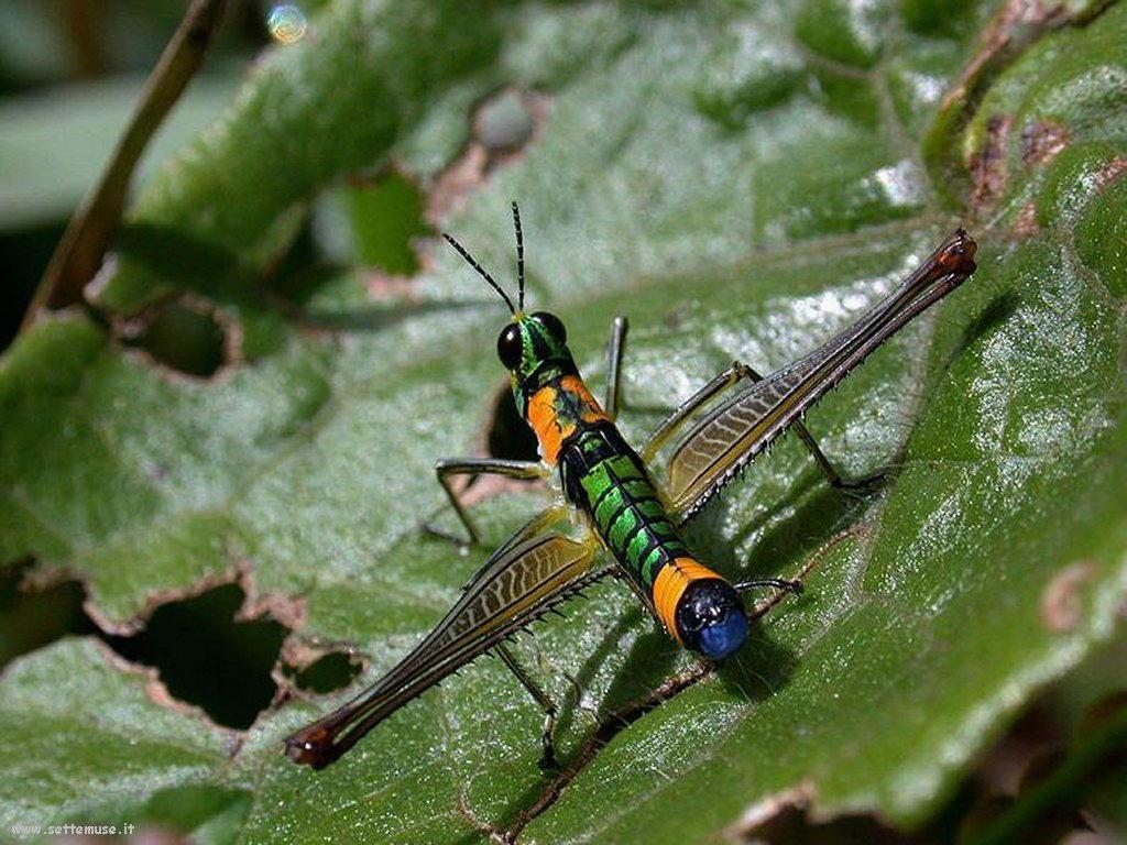 Foto di insetti strani 546