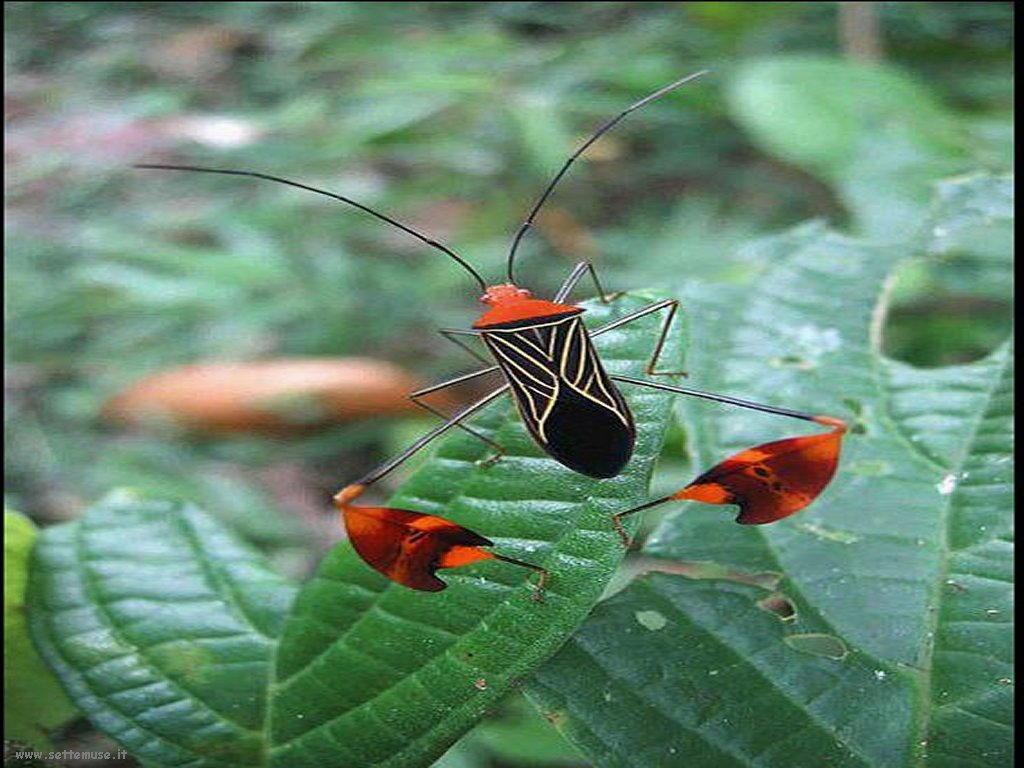 Foto di insetti strani 548