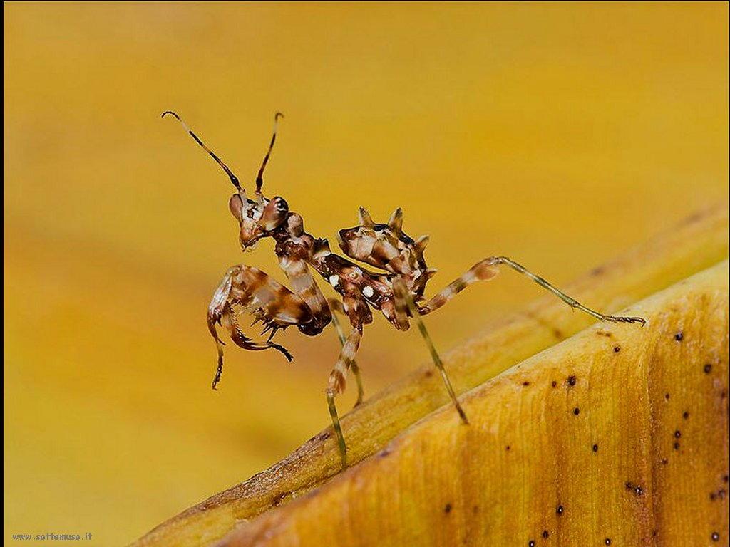 Foto di insetti strani 551