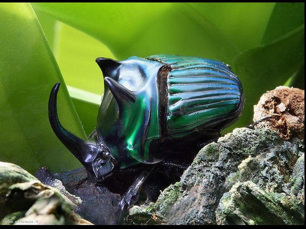 Foto di insetti strani 552