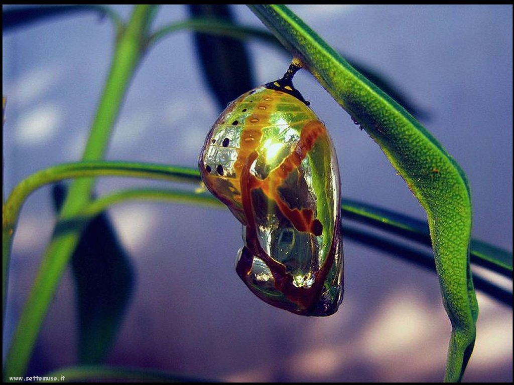 Foto di insetti strani 554