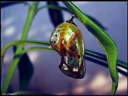 Foto sfondi insetti vari e strani