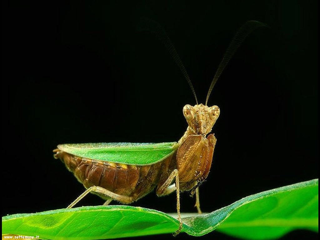 Foto di insetti strani 555